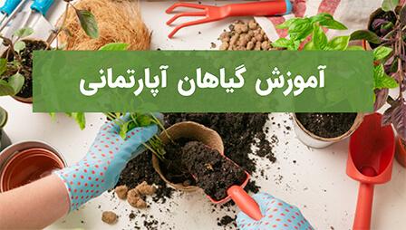 آموزش گیاهان آپارتمانی