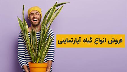 فروش گیاهان آپارتمانی